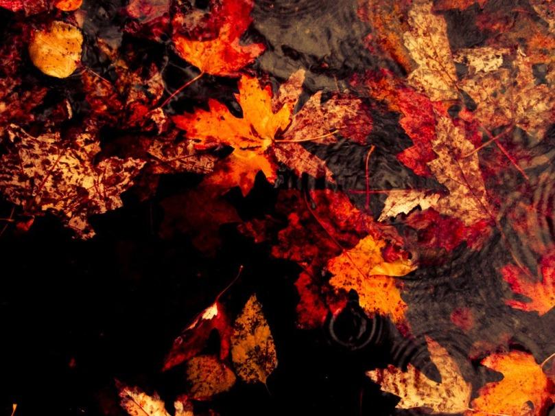 autumn_rains